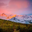 Denali - Alpenglow 4 by Mary Carol Story