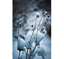 Snow Forms Photographic Print
