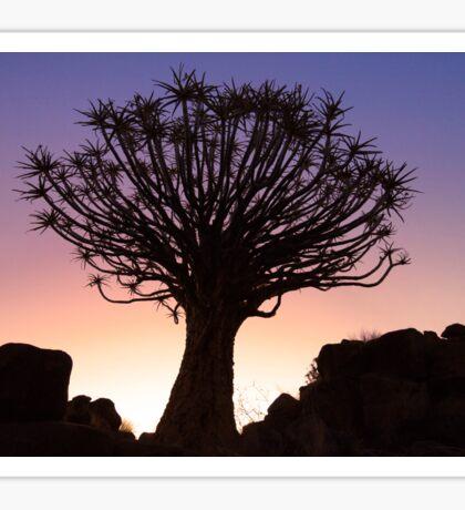 Sunset Quiver Tree, Garas Park, Namibia Sticker