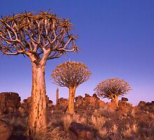 Dusk in the Quiver Tree Forest by SeeOneSoul