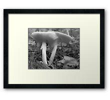 White Mushrooms Framed Print