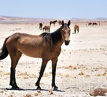Wild Horses of Namibia by SeeOneSoul
