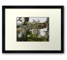 Moss Covered Branch Framed Print