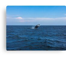 Whale of a time (color)! Canvas Print
