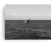 Whale of a time (b & w)! Canvas Print