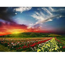 Beautiful landscape scenery rose valley countryside nature horizon the valley roses nature - Oil Paint Art Photographic Print
