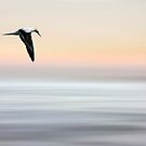 flying high by ketut suwitra