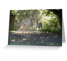 Cremello mare and foal 1 Greeting Card