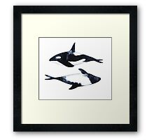 Killer Whale and dolphin. Black-and-white illustration Framed Print