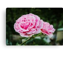 Roses Are Not Always Red Canvas Print
