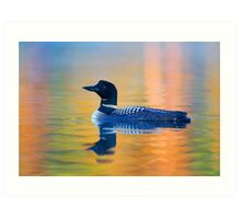 Rainbow Loon- Common Loon Art Print