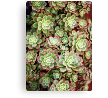 Succulents of Marina Del Rey Canvas Print