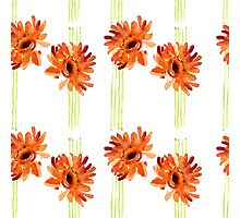 Orange gerbera with green stripes Photographic Print