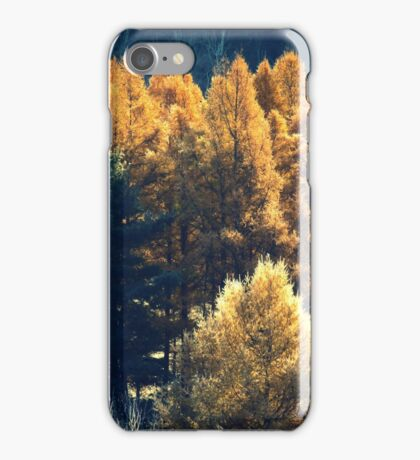 Forest in Quebec  iPhone Case/Skin