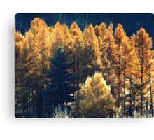 Forest in Quebec  Canvas Print