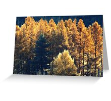 Forest in Quebec  Greeting Card