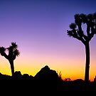 Almost Night Mojave Desert by Jo Nijenhuis