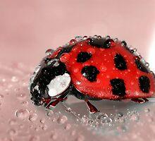 Ladybug Photography by Edmond  Hogge