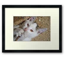 Kittens love to play Framed Print