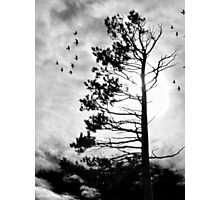 The Wind Blows this Way Photographic Print