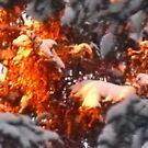 Sun-Fire by MaeBelle