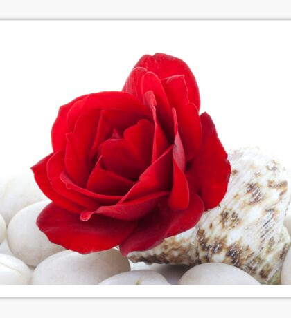 Red Rose in a Shell on White Pebbles Sticker