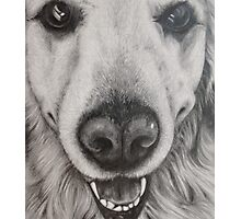 dog drawing Golden Retriever Photographic Print