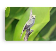 Palm Tanager Green Leaves Metal Print