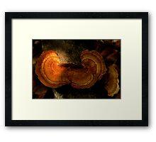 Fungi along the Gondwana Rainforest walk Framed Print