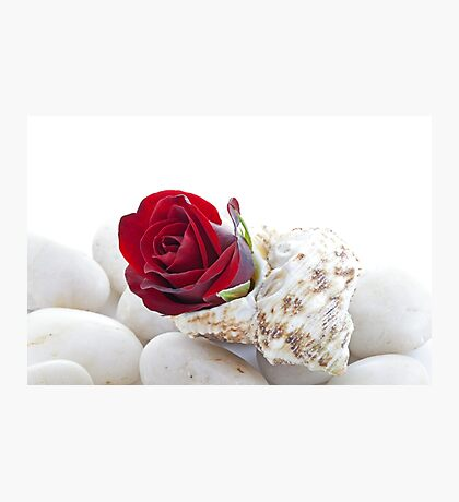 Red Rose Bud in a Shell Photographic Print