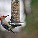 Woodpecker! by autumnwind
