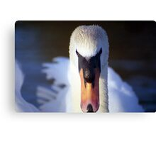 Swan of Llanfairfechan. Canvas Print