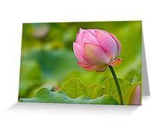 colorful lotus Greeting Card