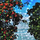 When Autumn Leaves Meet Summer Trees by kenspics