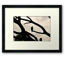 Hawks in Sepia  Framed Print
