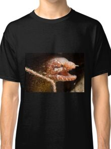 Bartail Moray, Wakatobi National Park, Indonesia Classic T-Shirt