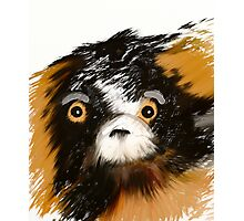 Black and Tan Puppy   Photographic Print