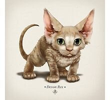 Cataclysm - Devon Rex Kitten Classic Photographic Print