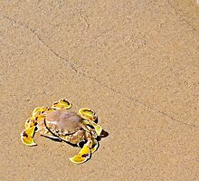 Spotted Moon Crab (Ashtoret lunaris)  by PhotoStock-Isra