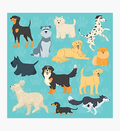 Dapper Dogs - pattern 2 Photographic Print