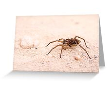 Wolf spider (Family Lycosidae) on sand Greeting Card