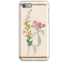 Circle of Madeleine Françoise Basseporte  Moth mullein (Verbascum blattaria) (left). Milfoil, yarrow (right) iPhone Case/Skin