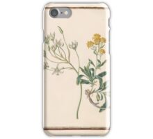 Circle of Madeleine Françoise Basseporte  Bille de Onze Heures   painting, flowers iPhone Case/Skin