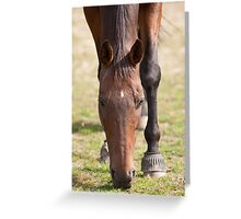 Thoroughbred Horse Grazing Greeting Card