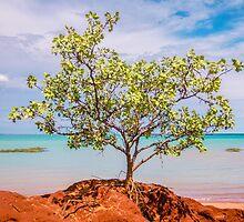 simpson beach mangorve tree  by Elliot62