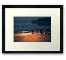 Common crane (Grus grus) Silhouetted at sun-set Framed Print