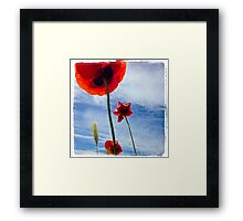 Poppies in the sky Framed Print