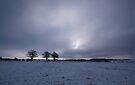 Winter Field by Nigel Bangert