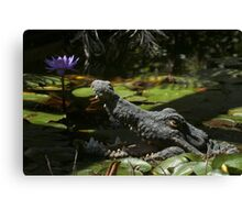 Don't be fooled Canvas Print