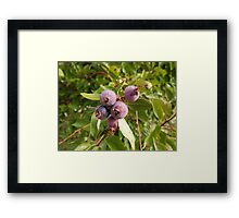 May I have some of your purple berries? Framed Print